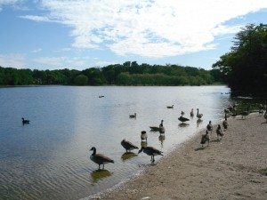 Artist Lake